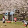 上座公園の桜と新人会員