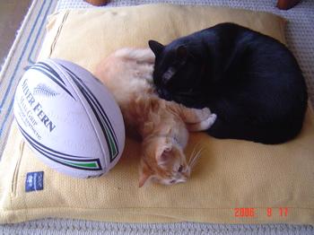 猫とボール